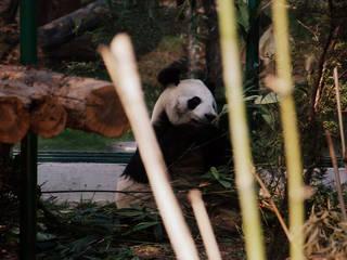 Zoologico de Chapultepec © LWY